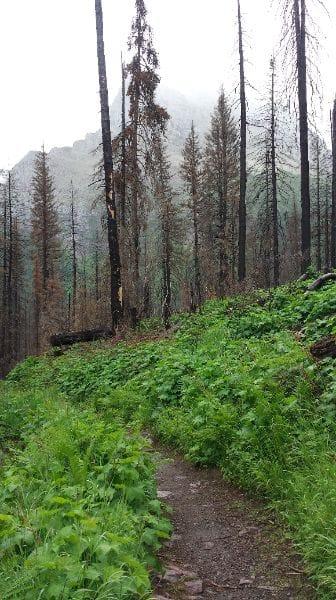 Hiking trail in Glacier National Park