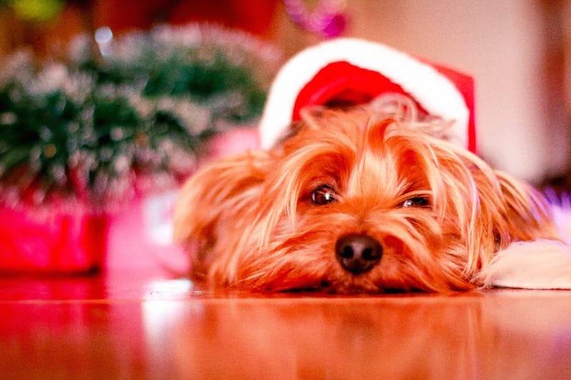We Wish You a Merry Debt-mas