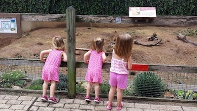 Kids looking at prairie dogs at the David Traylor Zoo